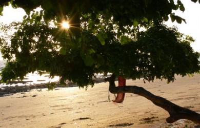 Relax Beach Resort på Phi Phi Island