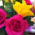 Smukke farverige roser