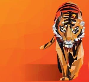 Kom tæt på en tiger
