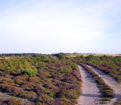 Klithjem Badehotel ligger i et naturskønt område