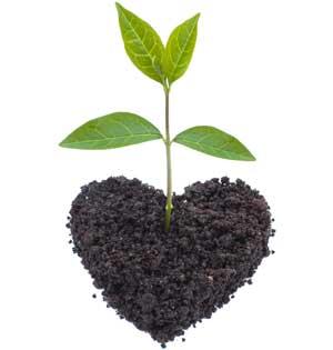 Giv en plante i gave