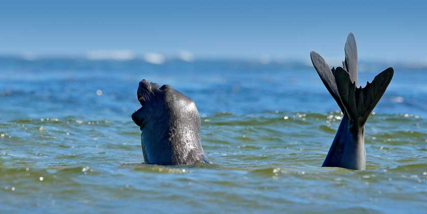 Rigt natur og dyreliv i Nordjylland