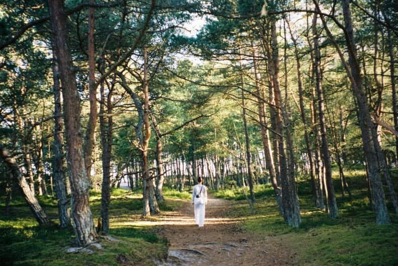 På ferie i skoven i Danmark